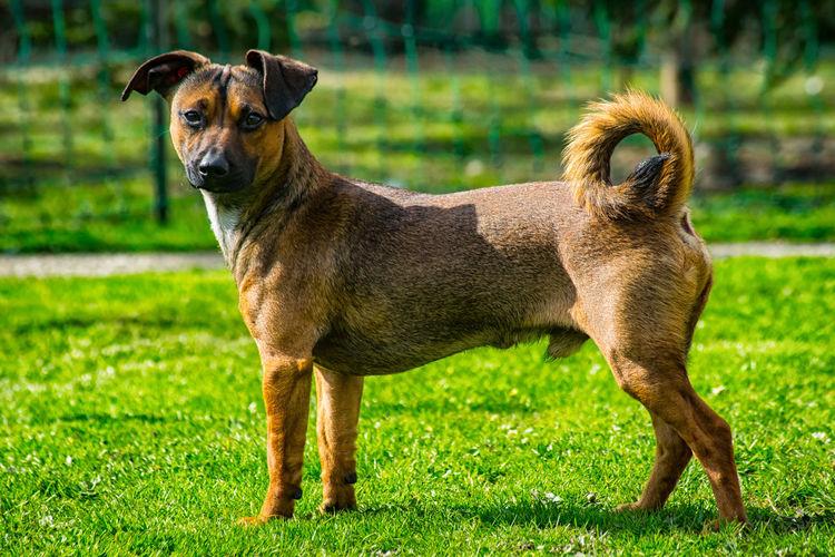 Klopsi Dogs