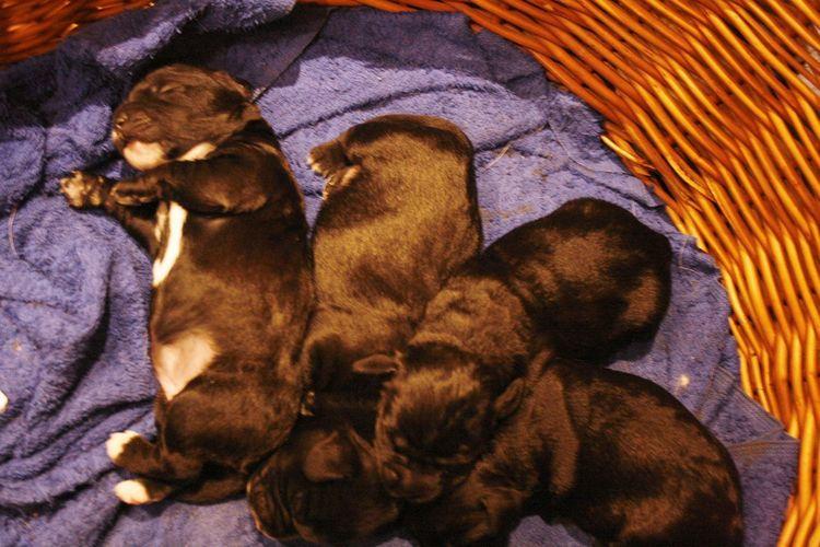 Dogs Welpen Babies Babydogs Dreaming... Hundebaby Sleeping Young Animal