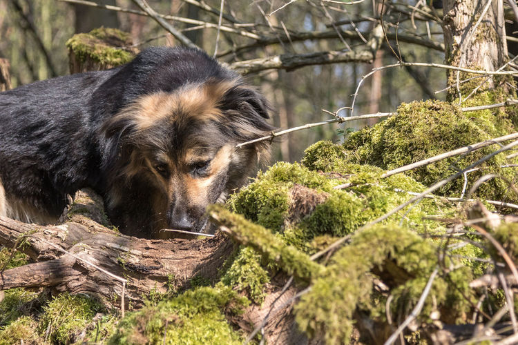 View of a dog in the forest