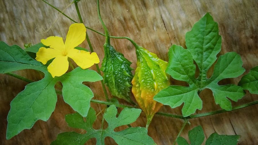 High angle view of yellow leaves on plant