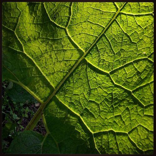 Verano Verde Details Loves_details Collection_details Loves_nature лето цвет лопух Детали