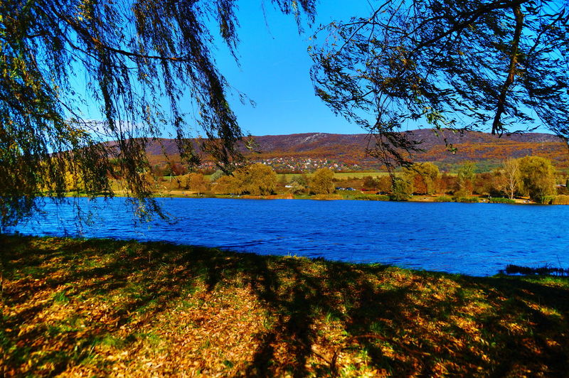 Lakeside in autumn Trees Autumn Beauty In Nature Blue Sky Branch Brown Day Lake Landscape Nature No People Outdoors Pilis Pilisszántó Scenics Sky Sunlight Tranquil Scene Tranquility Tree Water Wind