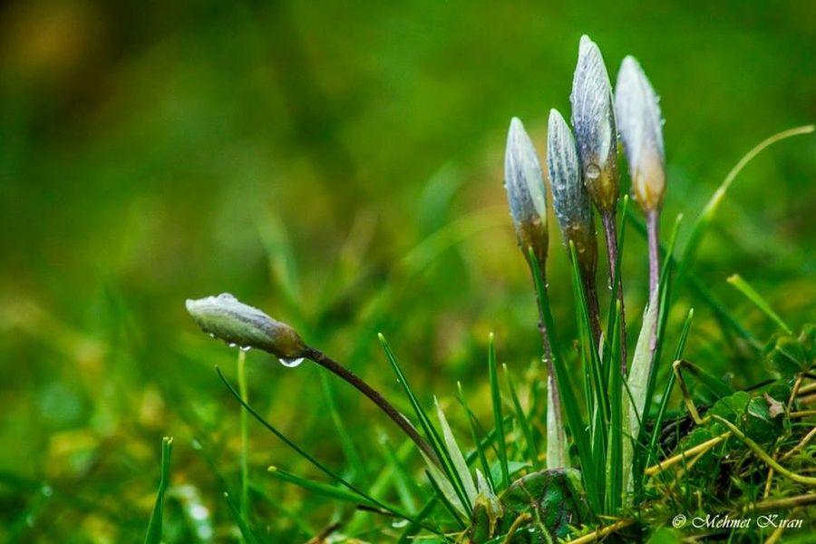 Flowers Nature Kazdaglari Macro Photography Macro_flower