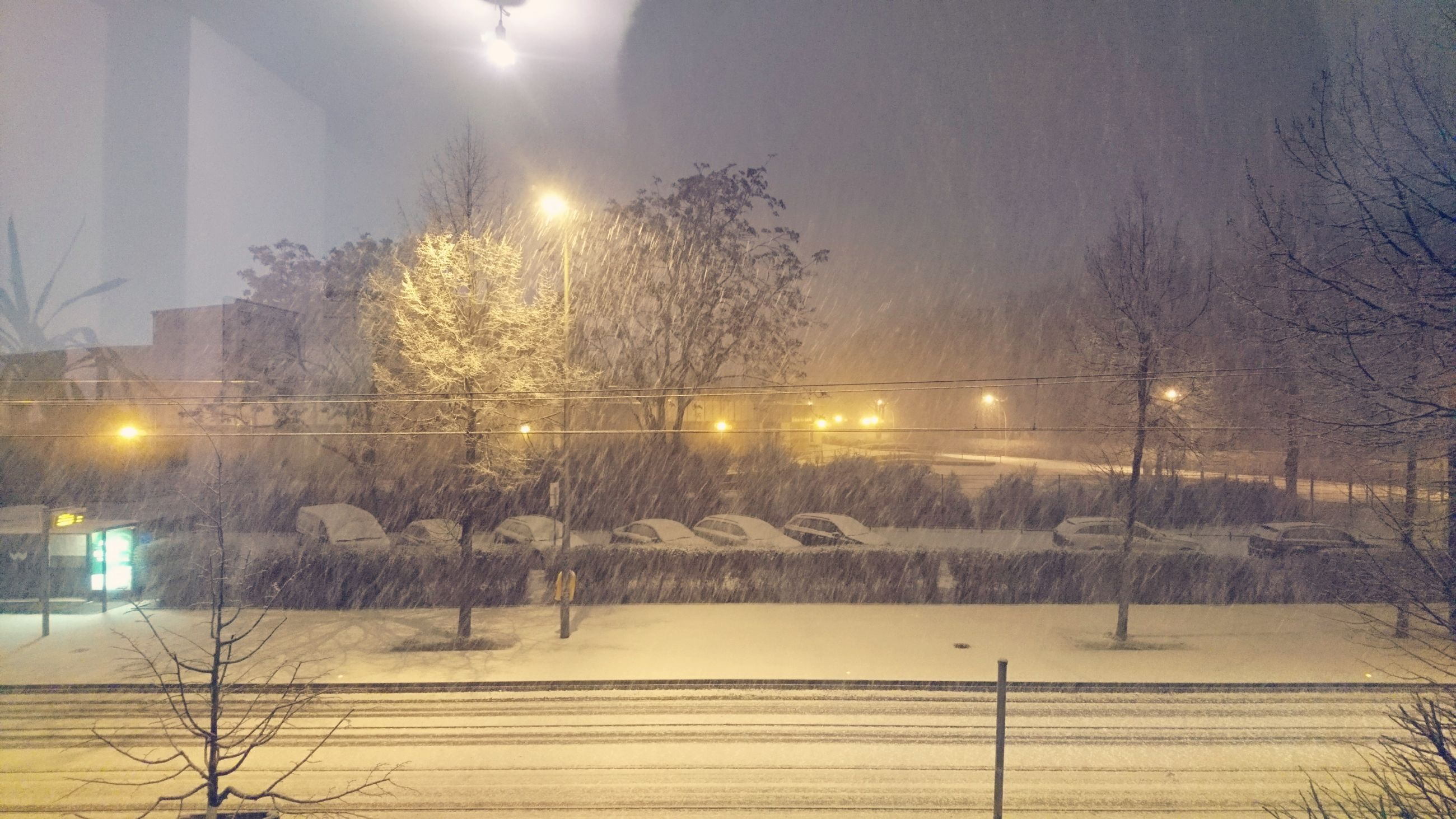illuminated, cold temperature, winter, tree, night, no people, snow, sky, outdoors, soccer field, nature, match - sport