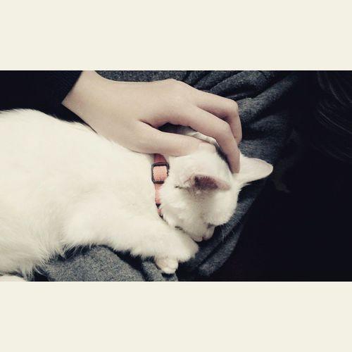 Lazycat Tom So Cute 😻💕