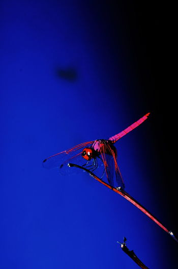 Low angle view of dragonfly flying against blue sky