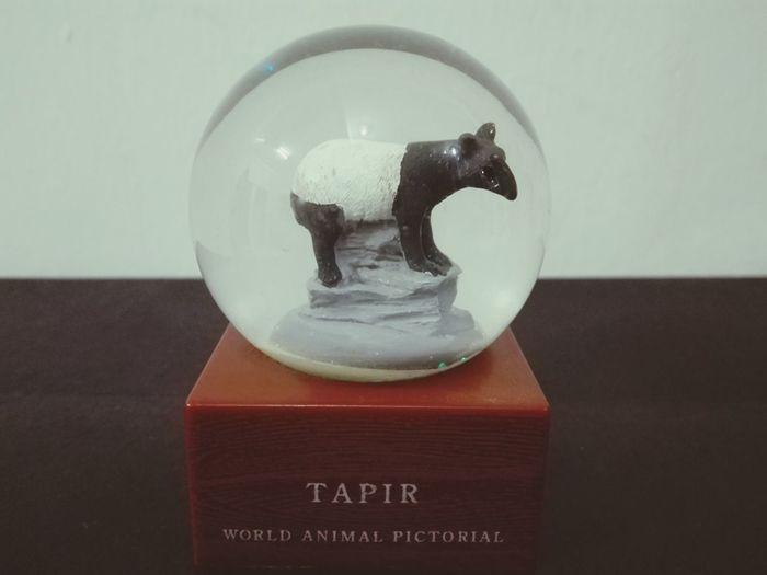 Tapir バ ク マレーシアバク