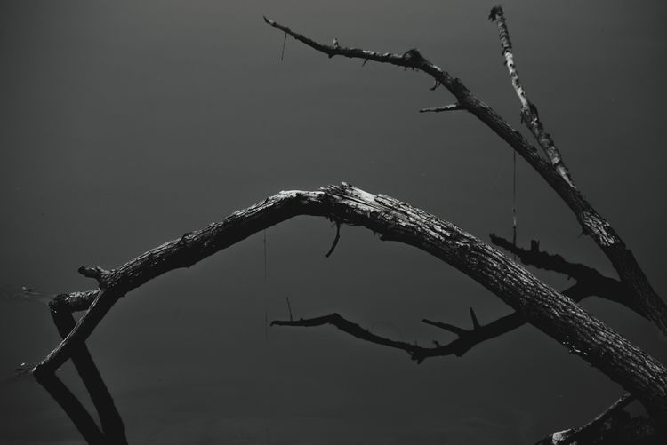 Copy Space Nature Winter No People Cold Temperature Outdoors Branch Day Dead Tree Close-up Water Beauty In Nature