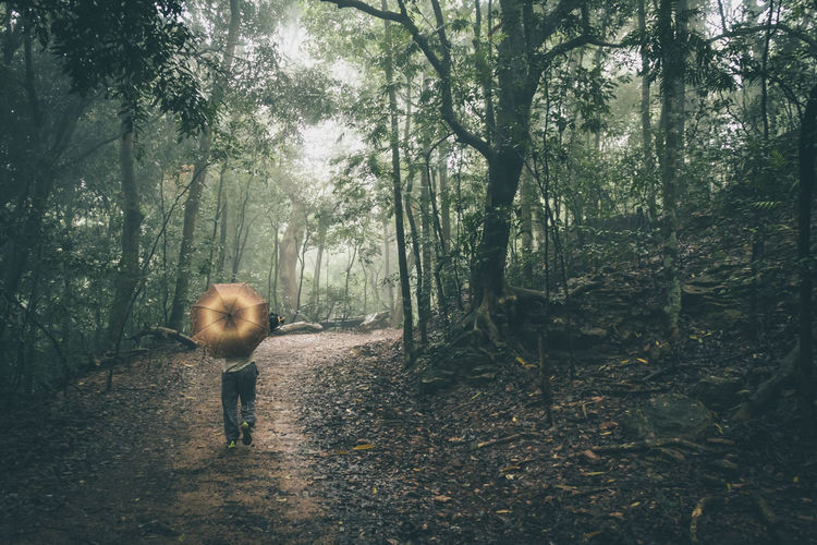 Man with umbrella walking in forest