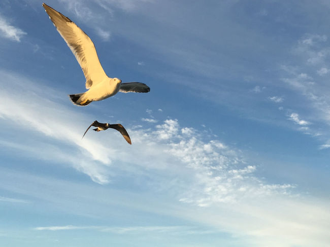 Hope Nature Blue Sky Flying Flying Bird Outdoors Sea Gulls Sky