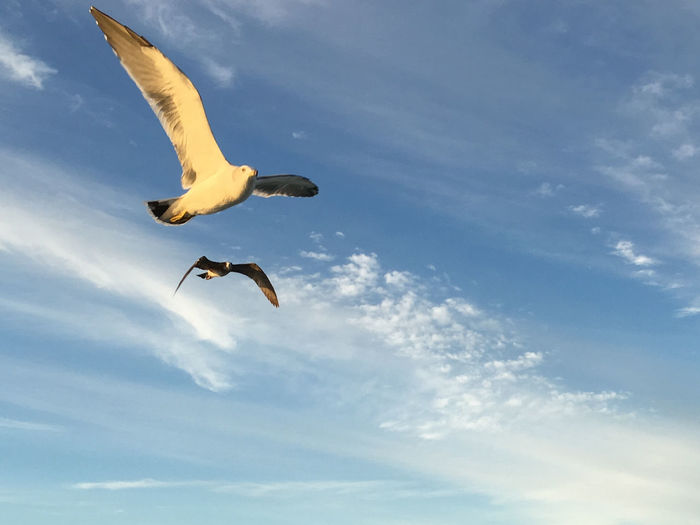 Hope Nature Blue Sky Flying Flying Bird Outdoors Sea Gulls Sky