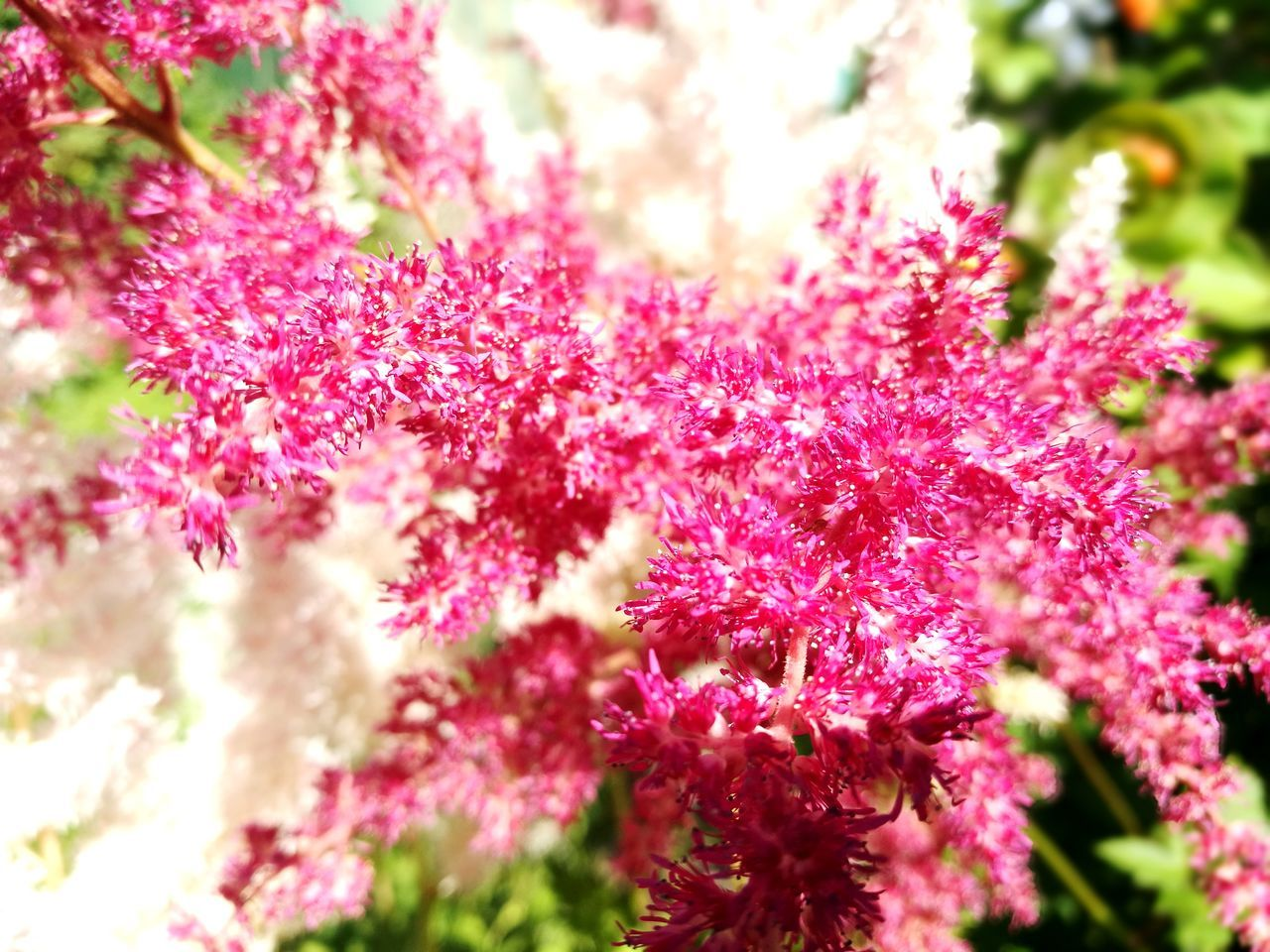 nature, growth, beauty in nature, pink color, flower, no people, selective focus, day, fragility, outdoors, freshness, plant, close-up