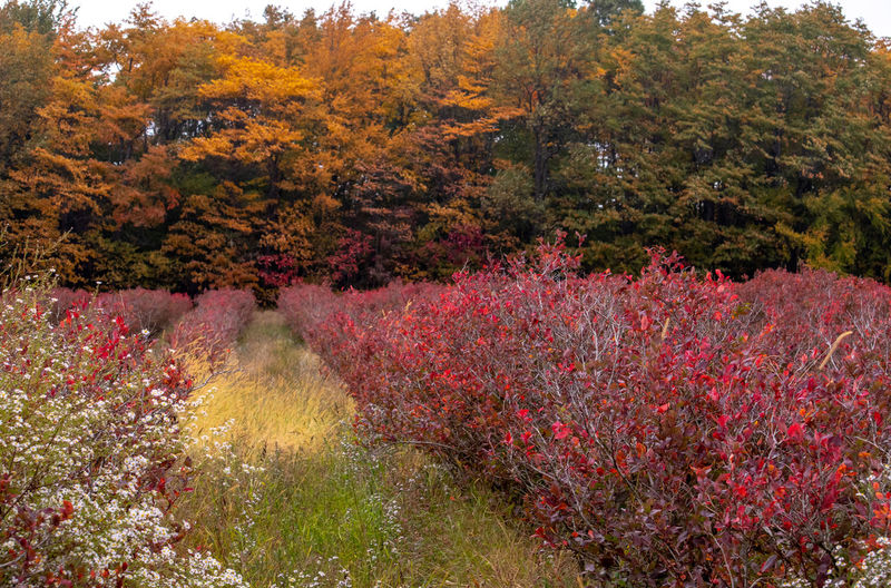 Red flowering trees in forest during autumn