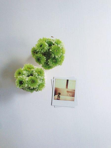 Vscocam Polaroid SX70 Px70 Polaroid