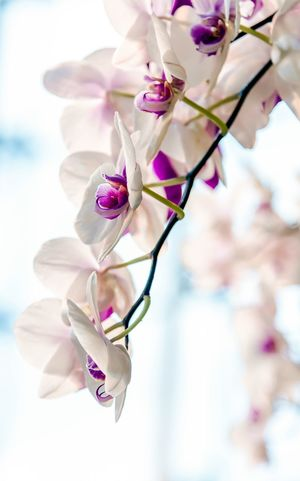 Beautiful Orchids hanging in a butterfly garden. Springtime Spring Flowers Spring EyeEm Flower EyeEm Masterclass Eye Em Nature Lover EyeEm Best Shots - Nature EyeEm Selects EyeEm Gallery EyeEm Best Shots EyeEm Nature Lover Eyeem Market Flower Petal Fragility Beauty In Nature Nature Pink Color Growth Close-up Blossom Flower Head No People Springtime Blooming Branch Outdoors Tree Day
