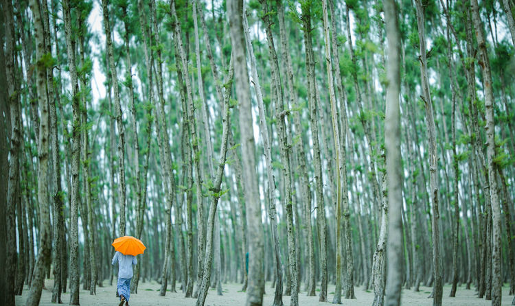 Cox's Bazar, Bangladesh Tree Adult Cox's Bazar Day Forest Nature One Person Outdoors People Summer Tree Water