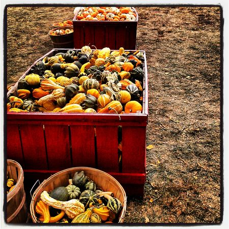 Farm Farmstand Taking Photos EyeEmbestshots