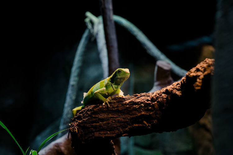 Close-up of green lizard on branch in forest