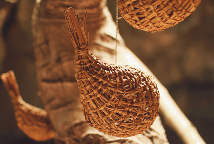 Close-up of bird hanging on wicker basket