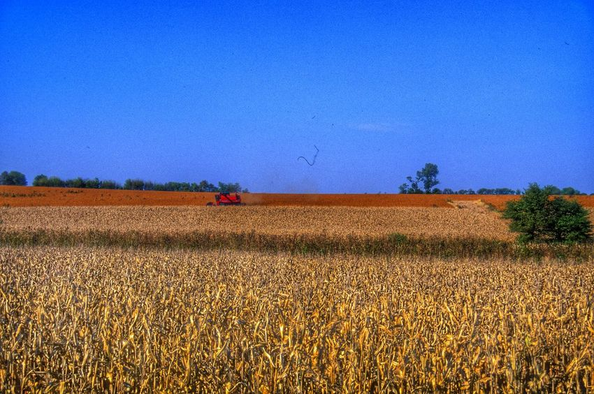 Farm field ready for harvest Field Fields Harvest Harvest Time Farm Life Farmland Farm Farming Grainfields Grain Field Lines Colors Color Blue Golden Harvesting Harvesting The Land Harvest Season Harvesting The Field Landscape_Collection Landscape_photography Landscape Americana America Nature_collection
