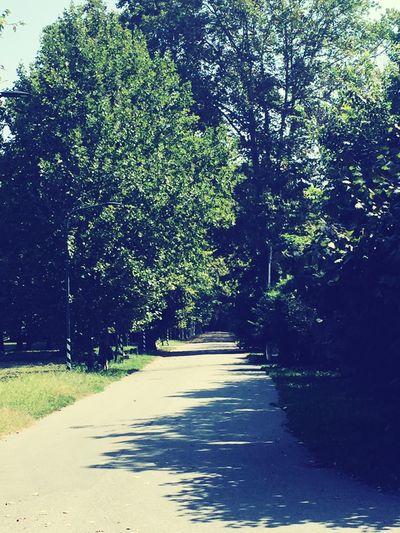 Running Trees Running In The Park Empty Mind