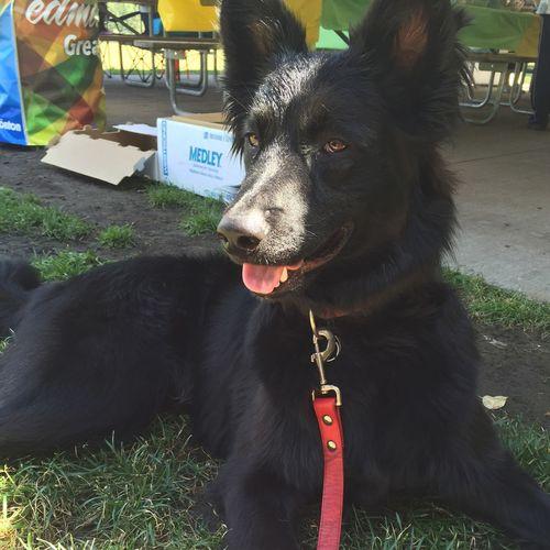 My main man 💞 Belgiansheepdog BBQ Edmonton ☀