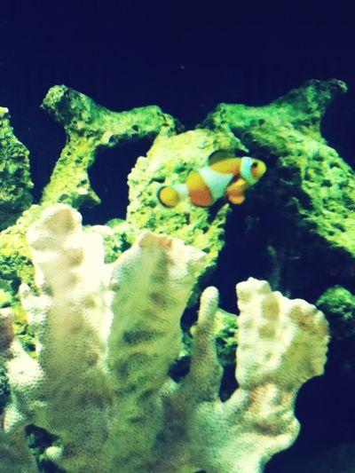 Nemo :3