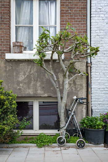 Amsterdam Architecture Brick Building Building Exterior Built Structure City Day Entrance Façade Flower Pot Gardening Growth House Houseplant Nature No People Outdoors Plant Potted Plant Residential District Street Scene Tree Walking Aid Window
