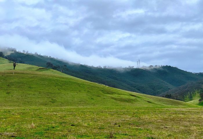 """""""Fog Crested Hills"""" Fog and low clouds hug the crest of beautiful rolling hills in the countryside of the San Francisco East Bay Area. Green Hills Foggy Foggy Day Rolling Hills California Sky Landscape Land Cloud - Sky Environment Field Beauty In Nature Scenics - Nature Green Color Rural Scene Mountain"""