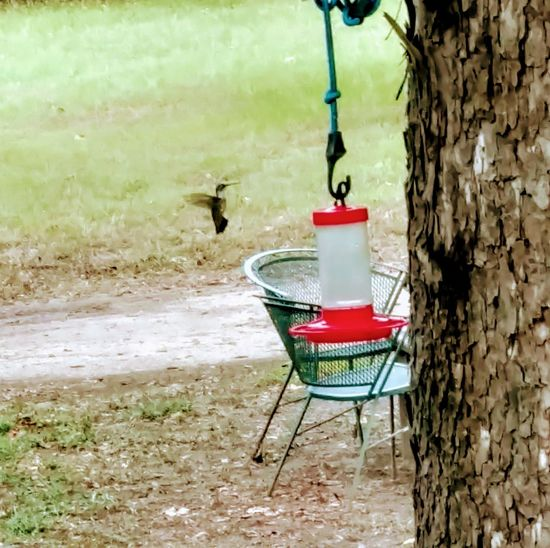 humming bird and feeder Nature Meets Fake Flowers For Food Tree Water Tree Trunk Chair Grass Landscape Outdoor Chair Bird Feeder Hummingbird