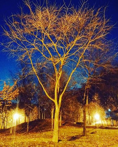 Sangam-dong, Seoul in Republic Korea. World-cup park. Photo name 'night shine-tree' Night Tree Republic Korea World-cup Park First Eyeem Photo