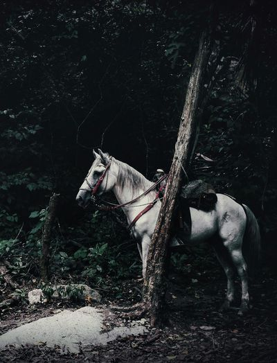 Horse standing on tree in forest