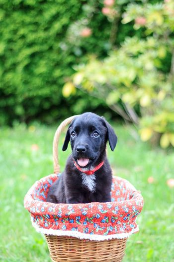 Puppy Hund Welpe One Animal Dog Pets Domestic Animal Themes Nature
