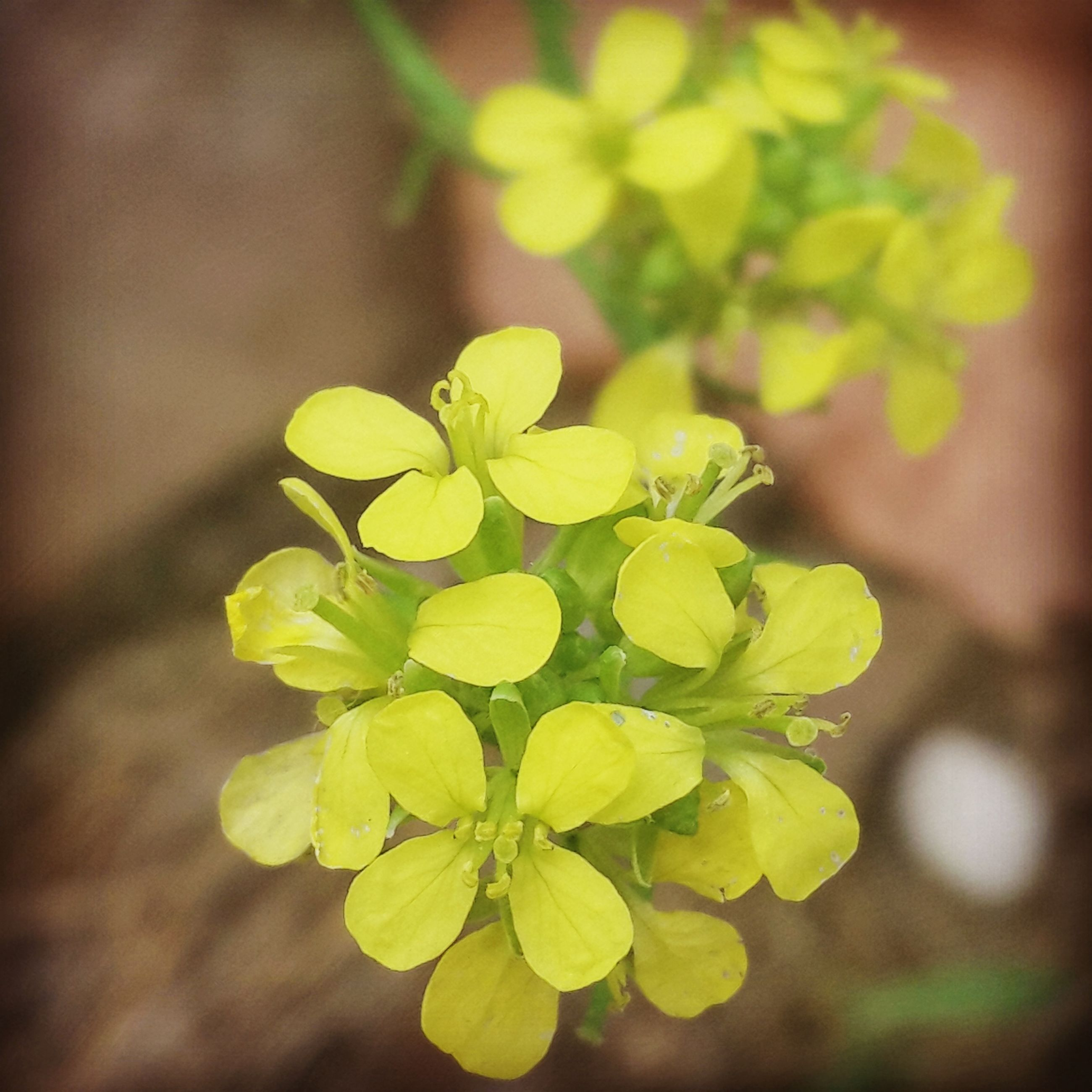 flower, growth, yellow, focus on foreground, freshness, close-up, fragility, beauty in nature, nature, plant, petal, leaf, selective focus, outdoors, day, bud, blooming, no people, flower head, green color