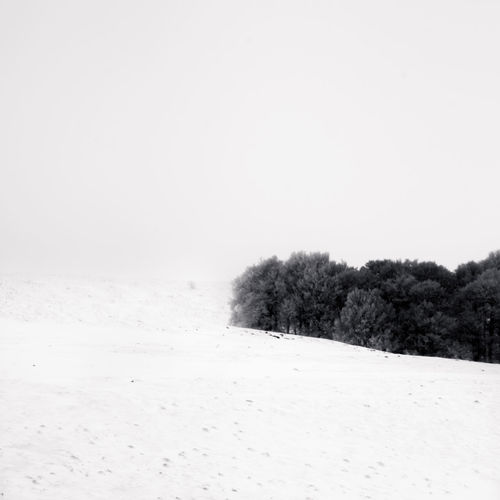 Trees on snow - auvergne - france Snow Winter Cold Temperature Copy Space Plant Tranquility Land Beauty In Nature Tranquil Scene Tree Nature Sky Covering Scenics - Nature Environment No People Field Landscape Clear Sky Outdoors Snowing Coniferous Tree