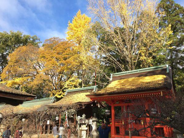 Autumn Shrine Of Japan Blue Sky Built Structure Fallen Leaves Kitanotenmangu Kyoto Yellow