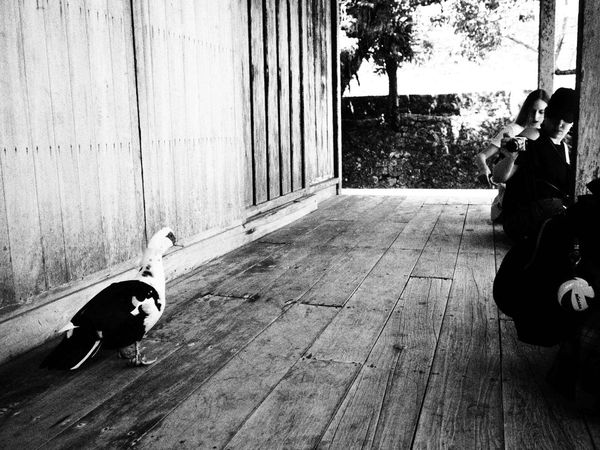 Lifestyles Blackandwhite Black And White City Life Black & White Naha-shi Japenesestyle Black And White Photography Naha City EyeEm China No Titte