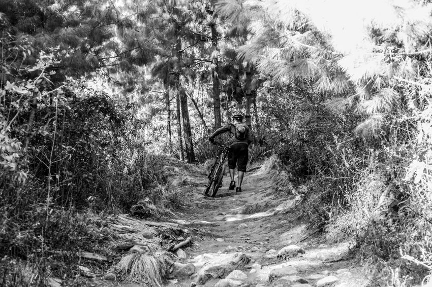 Bike Mountain Mountainbike One Person Full Length Leisure Activity Nature Forest Lifestyles Adventure Bicycle Bicycles Bicycling Bicycle Trip Bicicleta Mexico City Black And White Blackandwhite Photography Black & White Black And White Photography Black And White Collection  Ajusco