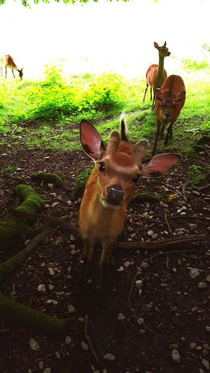 Bambi Green Outside Natural Animals Wildlife Reh My Year My View brown Lovely Sweet♡ EyeEm Selects