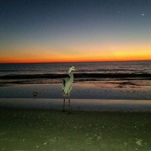 This bird came up to us on the beach and started posing for me... Too funny!! Bird Enjoying Nature Beach Beach Photography Enjoying Life Sunset Ocean Nofilter Noedit