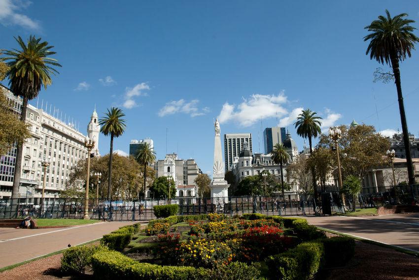 Plaza de Mayo - Buenos Aires - Argentina Buenos Aires City Plaza De Mayo Argentina City Main Square Palm Tree
