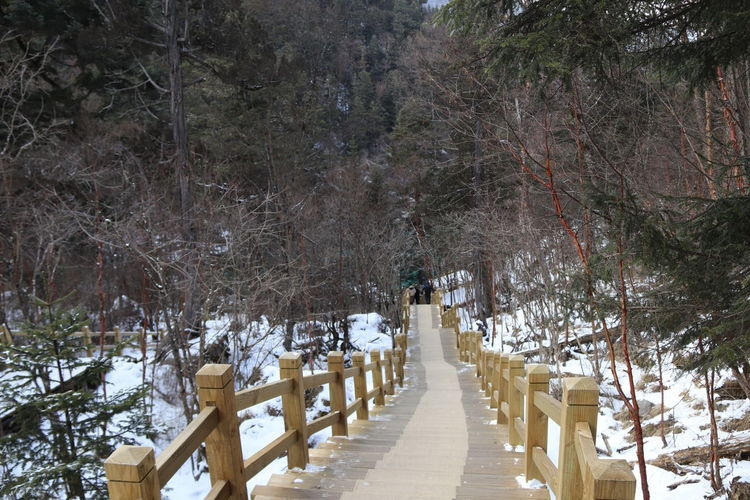 Footpath amidst trees in forest during winter