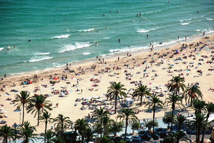 Alicante beach from above Palm Trees From Above  High Angle View Alicante SPAIN Spanish Costa Blanca Ocean Summer Beach Water Sea Beach Land Nature High Angle View Beauty In Nature Large Group Of People Sunlight Wave Scenics - Nature Group Of People Crowd Incidental People Day Tropical Climate Outdoors