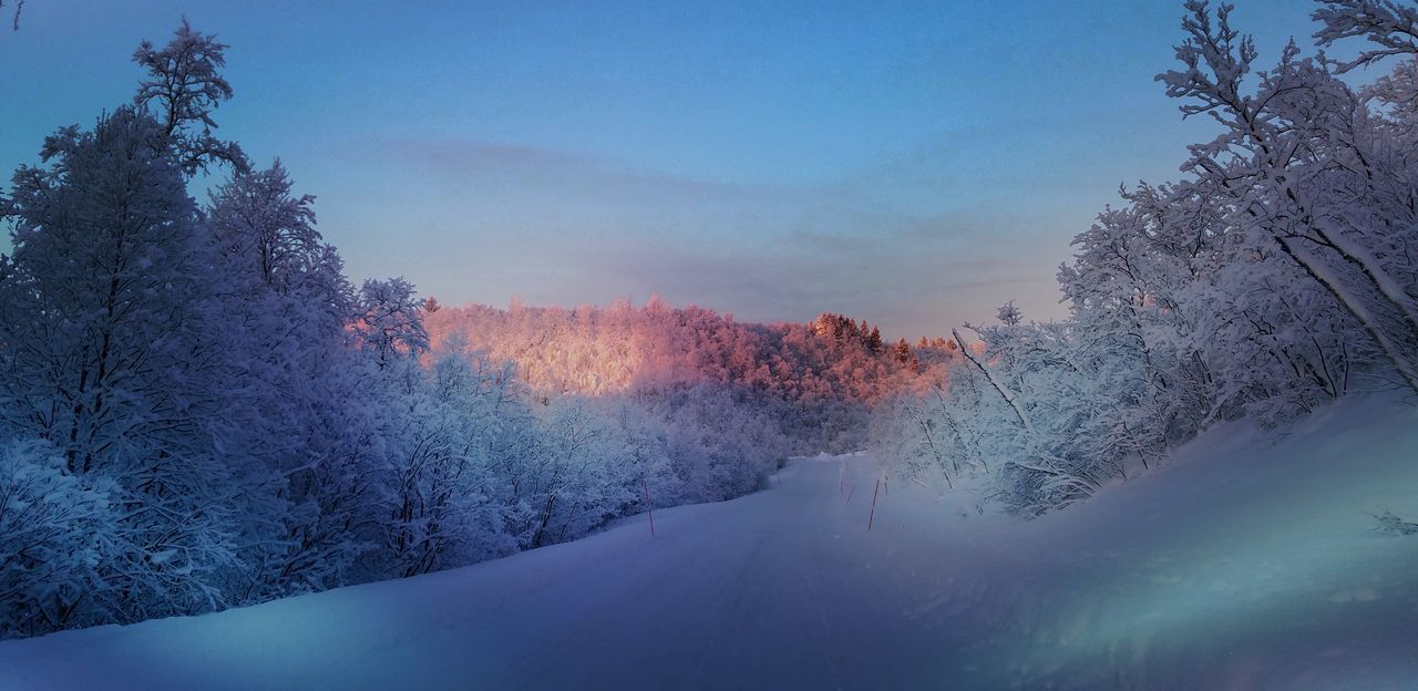 snow, winter, tree, cold temperature, nature, beauty in nature, outdoors, scenics, no people, tranquil scene, transportation, day, tranquility, the way forward, sky, road, landscape, mountain