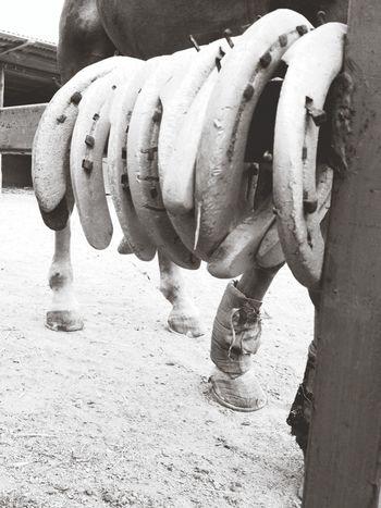 Horse Ferri Blackandwhite