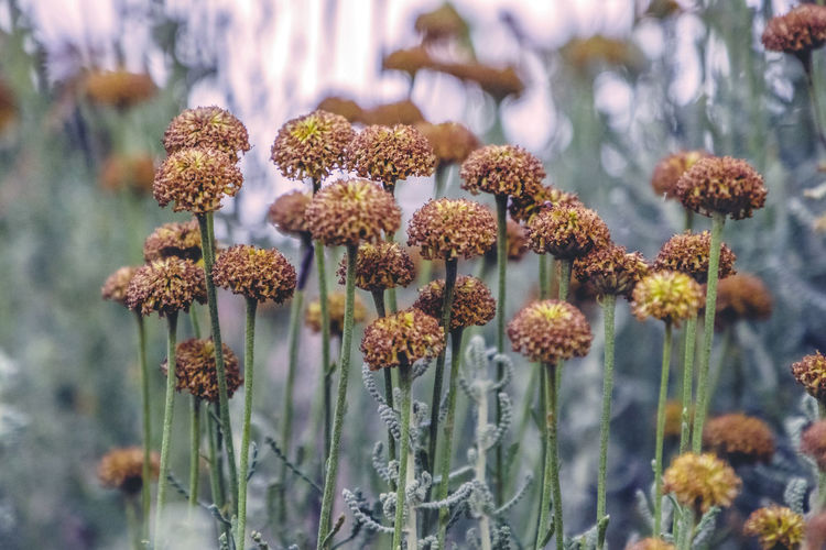 Close-up Growth Plant Flower Flowering Plant Beauty In Nature Fragility Vulnerability  Focus On Foreground Nature No People Freshness Day Flower Head Selective Focus Inflorescence Outdoors Petal Botany Plant Stem
