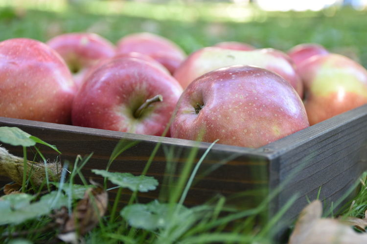 Food Food And Drink Healthy Eating Freshness Fruit Apple - Fruit Selective Focus Container Grass Close-up Plant No People Basket Day Box Agriculture Nature Outdoors Ripe Apple Red Wooden