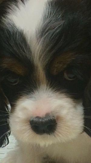 I Love My Dog My Dog Baby Doh-Ryung