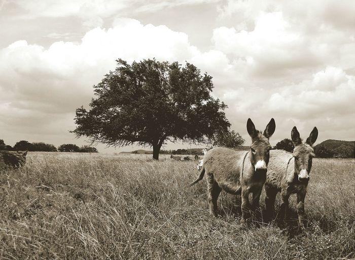 Donkeys on meadow under cloudy sky