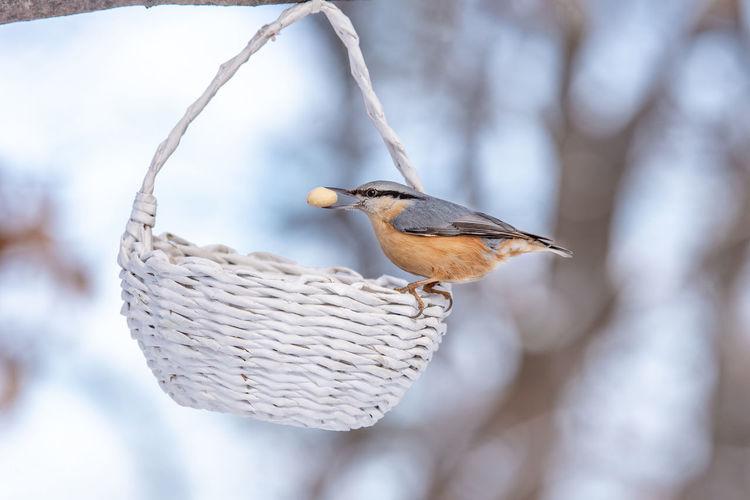 Close-up of bird perching on wicker basket
